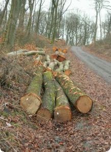 Peuplement forêt Valmont